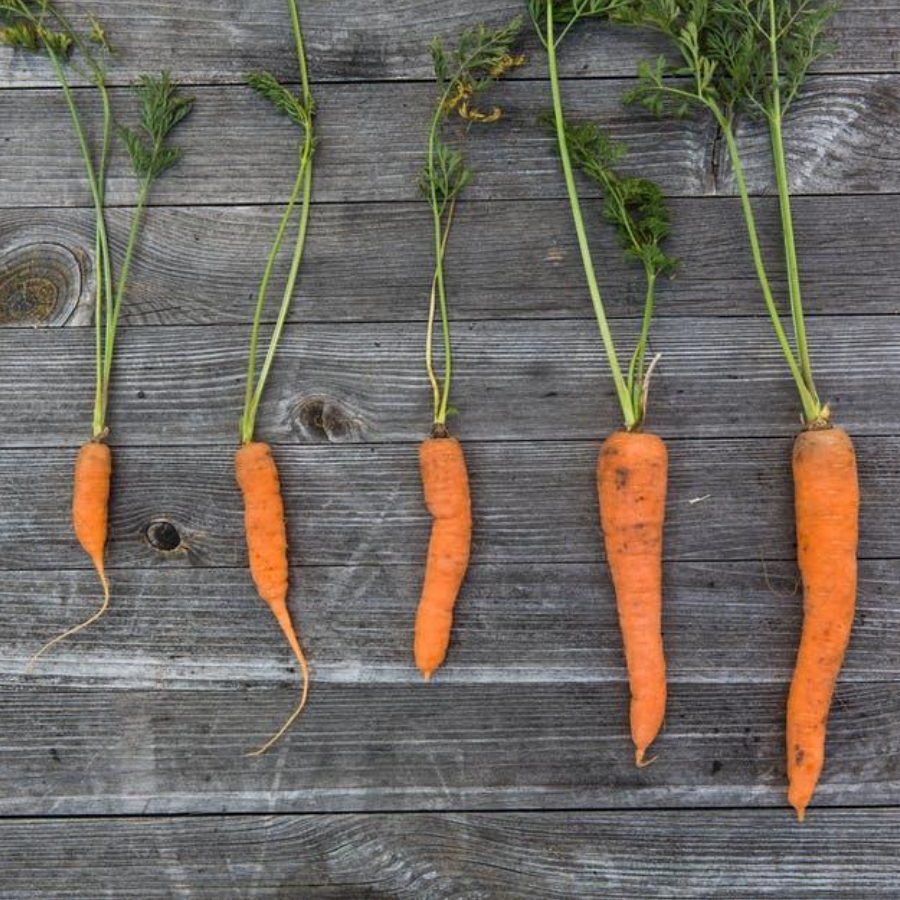 5 different sized fresh carrots lying on top of a wooden table