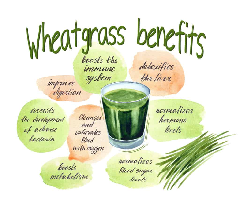 wheatgrass juice in a shot glass surrounded by the benefits of wheatgrass